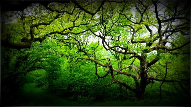 Duncliffe Wood, Dorset, England May 2015 (c) Sherri Matthews