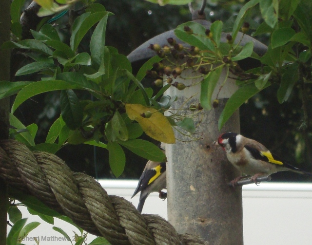 Beautiful Birds at the Feeder - Crop