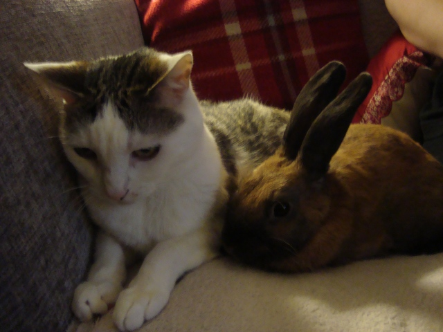 Maisy and Bunny...I just wants to be friends! (c) Sherri Matthews 2015
