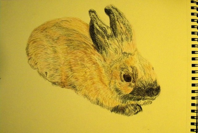 Nate Bunnykins drawn by Patsy Parker for me. Thank you so much dear Patsy!