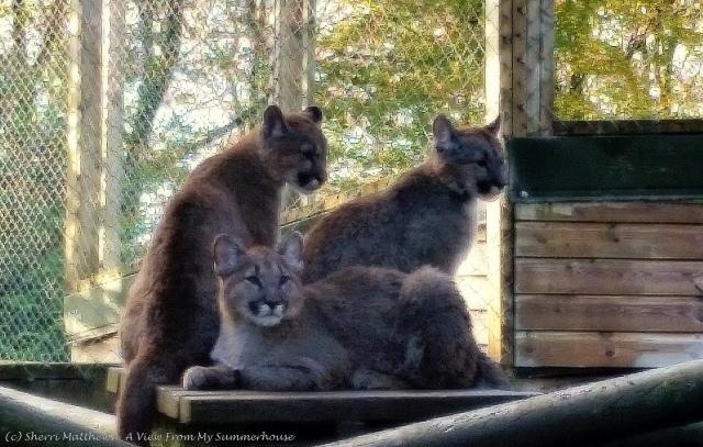 Exmoor Zoo Oct 2015 (94) 2 Edited