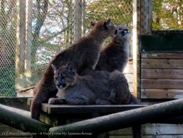 Exmoor Zoo Oct 2015 (95) Edited