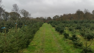 Christmas Tree Farm Nov 2015 (10)