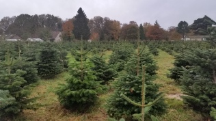 Christmas Tree Farm Nov 2015 (2)