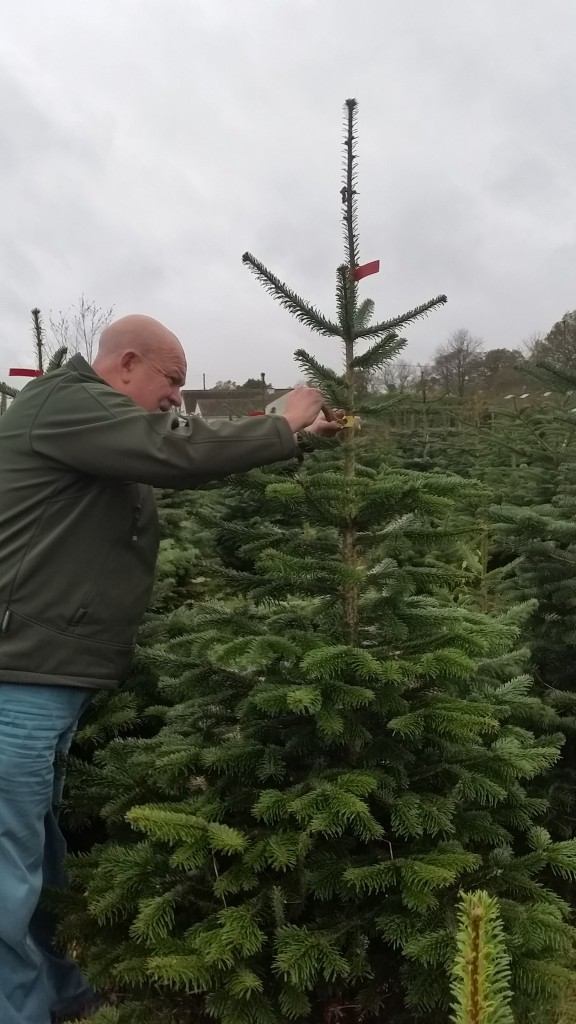 Christmas Tree Farm Nov 2015 (3)