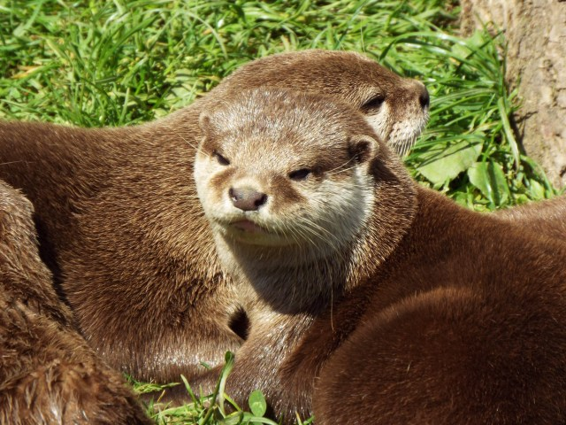 otter-world-july-2016-19