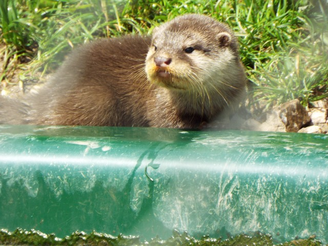 otter-world-july-2016-26