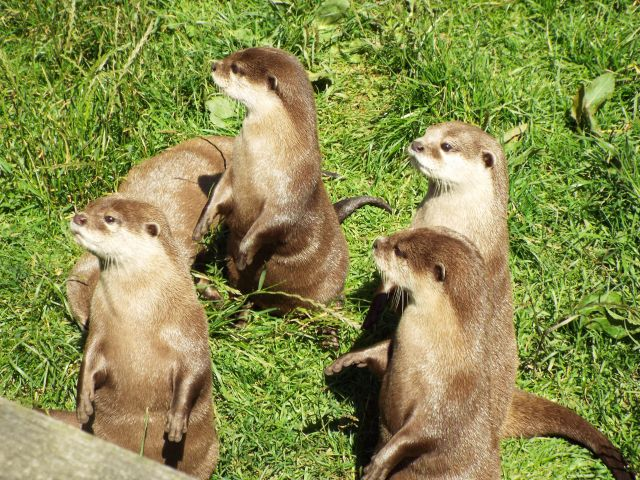 otter-world-july-2016-6