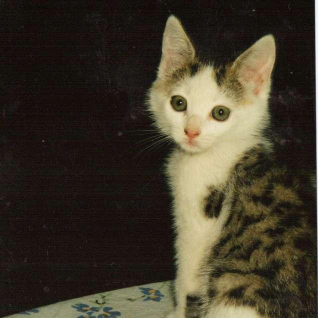 Kitten Maisy