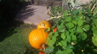 Pumpkin Patch 2018 (5)