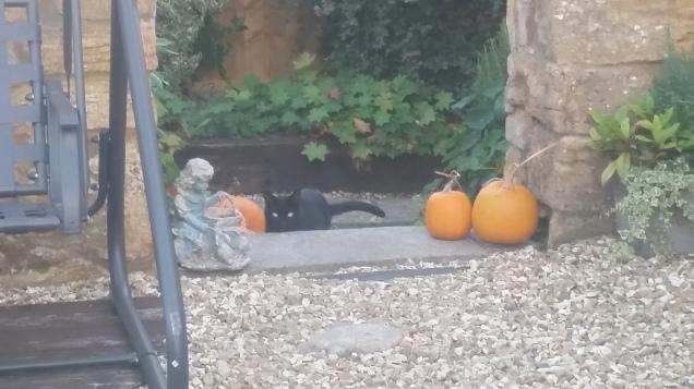 Pumpkin Patch 2018 (6)